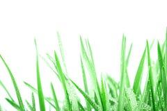 与小滴的新鲜的绿草在雨背景以后 库存图片