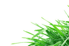 与小滴的新鲜的绿草在雨背景以后 免版税库存图片