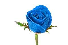 与小滴的蓝色玫瑰在白色背景 免版税库存照片