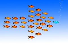 与小组的领导概念金黄鱼跟随同一个方向与他们的领导 图库摄影