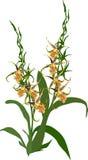 与小黄色绽放的绿色兰花在白色 库存照片