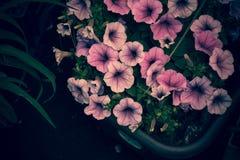 与少女的害羞的颜色的花 免版税库存照片