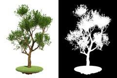 与少量分支细节光栅面具的绿色树 免版税库存照片
