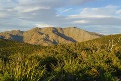 与尖的叶子的沙漠山在前景和一棵死的树 库存照片