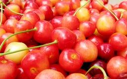 与尾巴的成熟甜樱桃 免版税库存照片