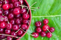 与尾巴的红色成熟樱桃在植物名一片绿色叶子的一块圆板材  免版税库存照片
