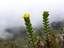 与山、云彩和黄色花的风景 图库摄影