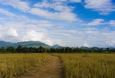与山和天空的草地 免版税图库摄影