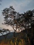 与山和树的日落 库存图片