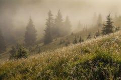 与山和树的美好的风景 免版税库存照片