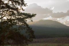 与山和落日的杉树 库存照片