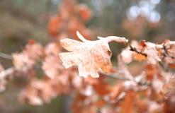 与山毛榉叶子的秋天背景 图库摄影