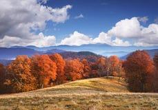 与山毛榉森林的秋天风景山的 库存照片