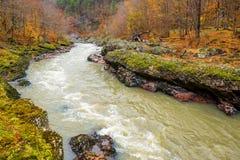 与山河和森林的风景 免版税库存图片