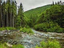 与山河Prut的好的场面在绿色喀尔巴阡山脉的森林里 免版税库存照片