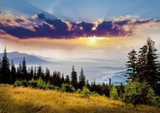 与山的云杉的中部的美好的风景 库存图片