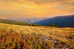与山的云杉的中部的美好的风景 免版税图库摄影