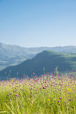 与山的夏天风景在阿塞拜疆 免版税图库摄影