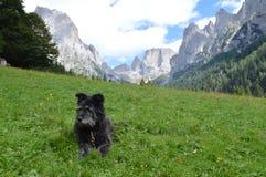 与山的意大利牧羊犬 库存照片