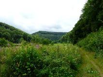 与山的森林领域 库存图片