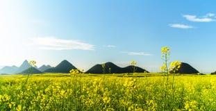 与山的油菜籽领域 免版税库存图片