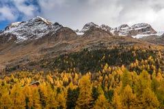 与山的秋天风景在Val Martello, southtyrol,意大利 库存照片
