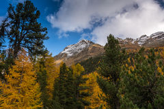 与山的秋天风景在Val Martello, southtyrol,意大利 库存图片