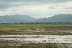 与山的米领域 免版税库存照片