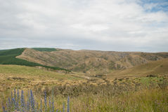 与山的金黄领域风景 库存照片
