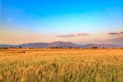 与山的麦田在代尼兹利,土耳其 库存照片