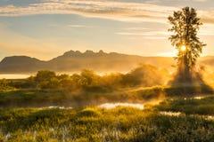与山的黄色有薄雾的风景 免版税库存图片