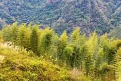 与山的绿色竹子 免版税库存照片