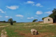 与山羊的农村场面 免版税库存照片