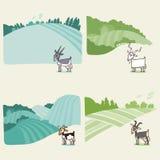 与山羊的农村风景背景 免版税库存图片
