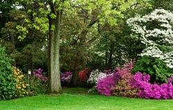与山茱萸、杜娟花和鸟舍的森林地场面 免版税库存照片