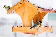 与山雀的鸟饲养者在冬天 库存图片