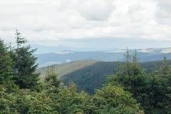 与山风景的云杉的树在背景 库存图片