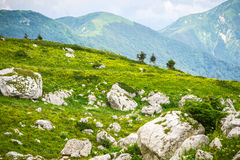 与山风景的绿色山谷在背景 免版税库存图片