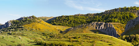 与山绿叶的风景 免版税图库摄影