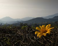 与山lanscape的美丽的黄色花作为背景 免版税库存照片