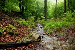 与岩石和树桩木头的一点溪 免版税图库摄影