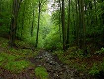 与岩石和树桩木头的一点溪 库存照片