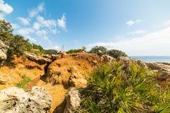 与岩石和植被的小小海湾 免版税库存图片