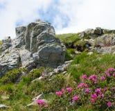 与岩石和美丽的野花的夏天风景在早晨薄雾 免版税库存照片