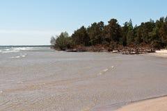 与岩石和老木头的波罗的海海滩 图库摄影