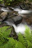与岩石和蕨的山小河 免版税图库摄影