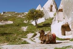 与岩石和骆驼的卡帕多细亚风景 库存图片