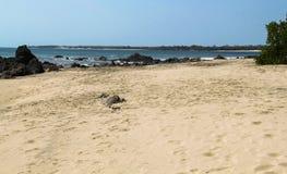 与岩石海岸线的离开的黄沙海滩在巴拿马 图库摄影