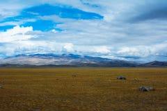 与岩石片断的明亮的干草原风景  免版税库存照片