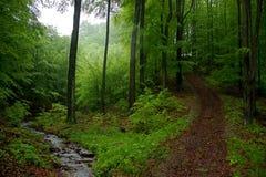 与岩石的一点溪和旁道在森林里 免版税库存照片